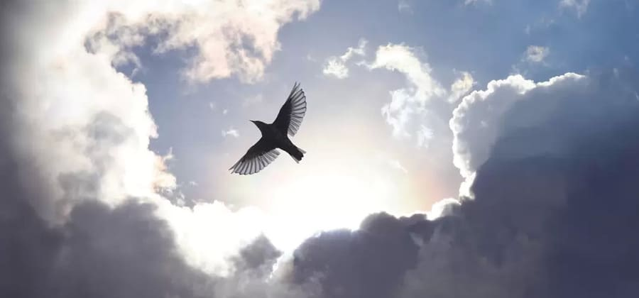 Fri som en fågel