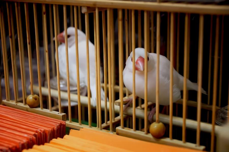 Lyckofåglar